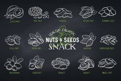 Nuts and seeds stock illustration