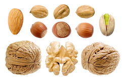 Nuts set. Stock Images