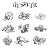Nuts set Royalty Free Stock Images