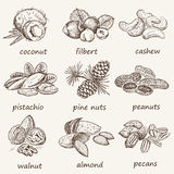Nuts set royalty free illustration