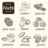 Nuts set. Hand drawn vintage illustration. Stock Photography