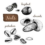Nuts. Set of illustrations. Stock Photo