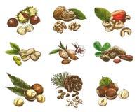 Nuts set Stock Photos