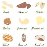Nuts set vector. Suits for fabric and package Royalty Free Stock Image
