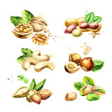 Nuts set. Watercolor  illustration Stock Photo