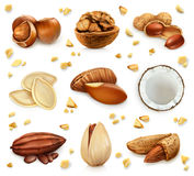 Nuts in the shell, vector icon set Royalty Free Stock Images