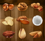 Nuts in the shell. Vector icon set. Nuts in the shell. Peanuts, pistachio, hazelnut, cocoa, walnut. Vector icon set Royalty Free Stock Photography