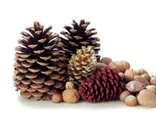 Nuts in shells with pine cones Royalty Free Stock Photos