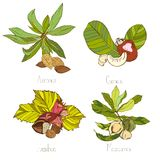 Nuts sketch style vector set. Four groups with leaves Stock Photo