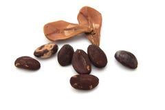 Nuts of a Stone pine, Pinus Pinea Stock Photos