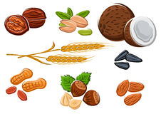 Nuts, sunflower seeds and wheat ears Stock Images