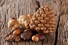 Nuts, sweet chestnuts and pine cones Royalty Free Stock Photos