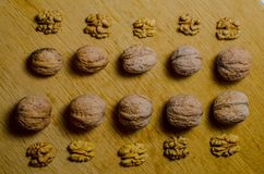 Nuts on a tree Royalty Free Stock Photography