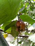 Nuts and tree leaves in summer garden royalty free stock photography