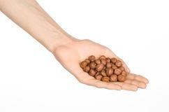 Nuts und Thema kochend: die Hand des Mannes, die die abgezogenen Haselnüsse halten lokalisiert auf einem weißen Hintergrund im St Lizenzfreies Stockbild