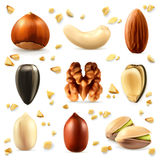 Nuts vector icons Royalty Free Stock Photo