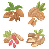 Nuts2 Royalty Free Stock Images