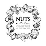 Nuts vector vintage frame illustration. Hand drawn engraved food objects. Stock Photography