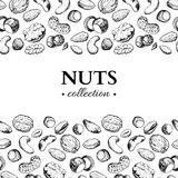 Nuts vector vintage frame illustration. Hand drawn engraved food objects. royalty free illustration