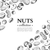 Nuts vector vintage frame illustration. Hand drawn engraved food objects. Royalty Free Stock Photography