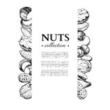 Nuts vector vintage frame illustration. Hand drawn engraved food objects. Royalty Free Stock Image