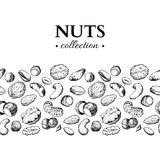 Nuts vector vintage illustration. Hand drawn engraved food objects. Royalty Free Stock Images