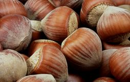 Nuts. Very high quality Turkish hazelnut royalty free stock images