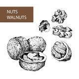Nuts. Walnuts. Stock Photo