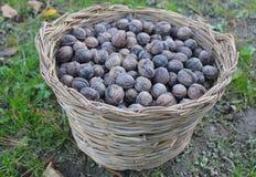 Nuts in wicker basket. Some nuts in wicker basket Stock Photo