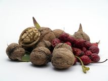 Nuts and wild rose Royalty Free Stock Photos