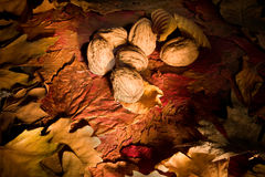 Nuts in the woods Royalty Free Stock Images