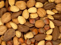 Nuts About You 1 Stock Images