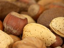 Nuts About You 2 Stock Photo