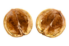Nutshells Royalty Free Stock Photography