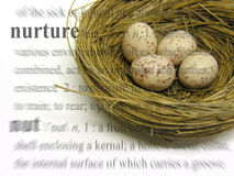 Nuture Theme. A photo of a nest full of eggs with a nurture theme royalty free stock images