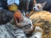 Nuturing小猫 免版税库存图片