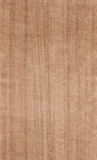 Nutwood texture royalty free stock photography