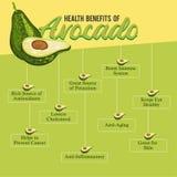 Nutzen für die Gesundheit der Avocado Frische Avocado lizenzfreies stockfoto