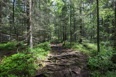 Nuuksio National Park Stock Photo