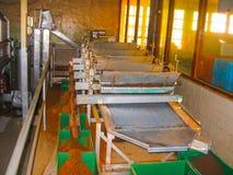 Nuvara Eliya Sri Lanla, Maj 03, -, 2009: Torby z herbacianą liść uprawą na Mackwoods Ograniczali PVT fabrykę Obraz Royalty Free