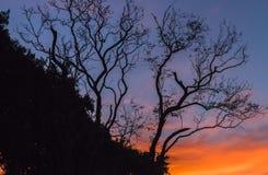 A nuvem colore a silhueta das árvores Foto de Stock Royalty Free