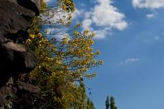 Nuvem do céu azul da natureza da flor Fotos de Stock
