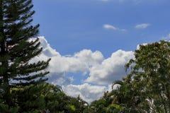 A nuvem e o pinho Fotos de Stock