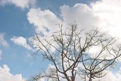 Nuvem elevada Imagem de Stock