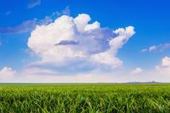 Nuvem encaracolado branca no fundo do céu azul Paisagem do verão - Foto de Stock Royalty Free
