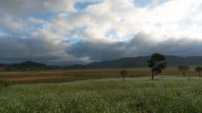 a nuvem no campo da mostarda com a flor branca em DonDuong - Dalat- Vietname imagem de stock