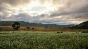 a nuvem no campo da mostarda com a flor branca em DonDuong - Dalat- Vietname foto de stock royalty free