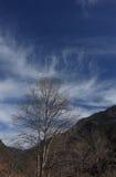 Nuvem que emite-se árvores Foto de Stock