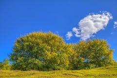 Nuvem sobre árvores imagens de stock royalty free
