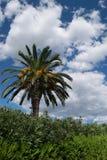Nuvem tropical da palma no fundo Imagem de Stock Royalty Free